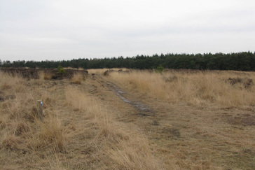 Vergrassing Heide